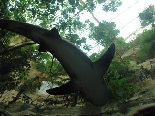 Dallas World Aquarium Zoo En Dallas Parkscout De