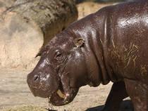 © BREC's Baton Rouge Zoo